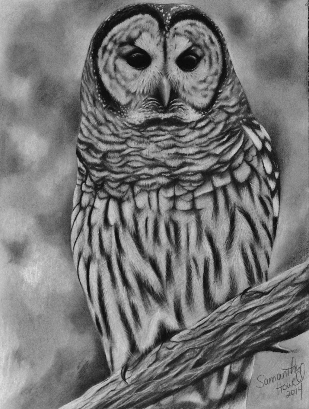 It is an image of Trust Barred Owl Drawing