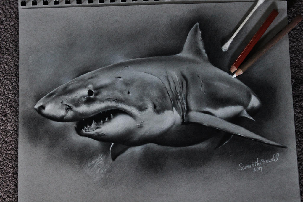 Funnies pictures about Great White Shark Realistic DrawingRealistic Shark Drawing