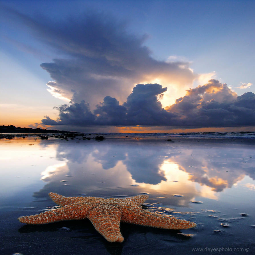 Starfish by foureyes