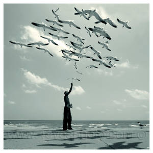 Dreams with the seagulls