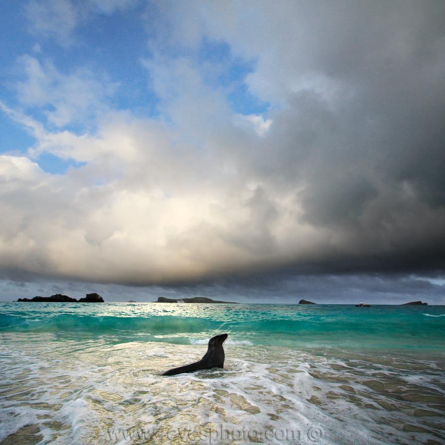 Galapagos Islands by foureyes
