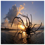 Ocean spider by foureyes