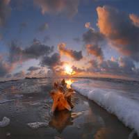 texas seashell by foureyes