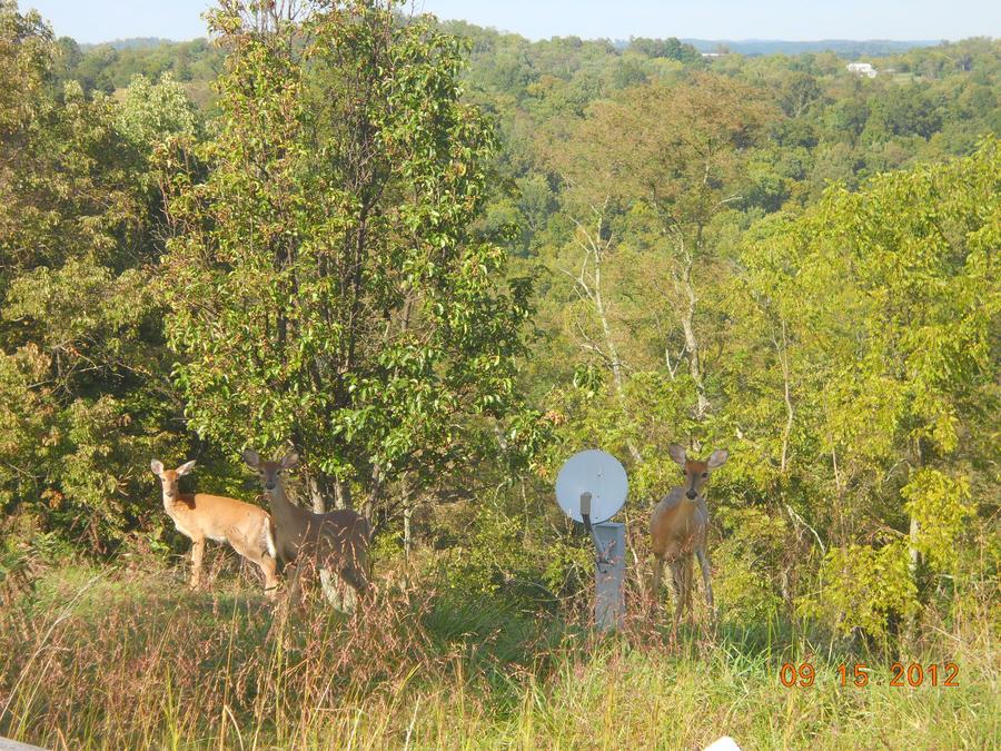 Three Deers by BabyImMeee