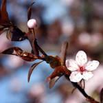 bold little beauty by A-l-a-s-s-e-a