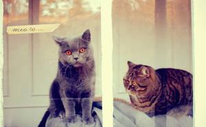 meow... by A-l-a-s-s-e-a