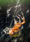 Web Weave 2