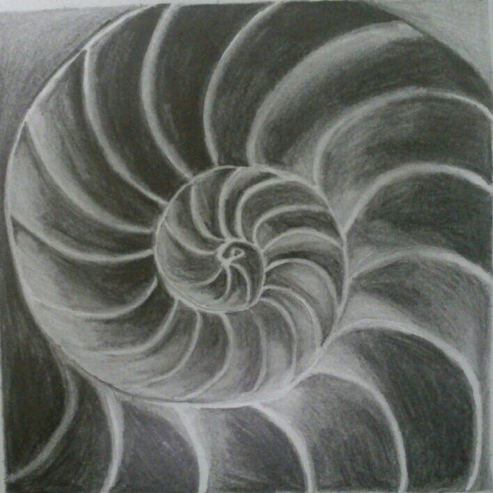 Seashell Observation Drawing (2) by SkyChow on DeviantArt