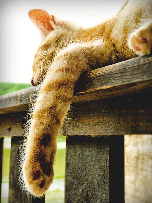 Sleepy by Noncsi28