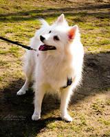 My little Koko by Noncsi28