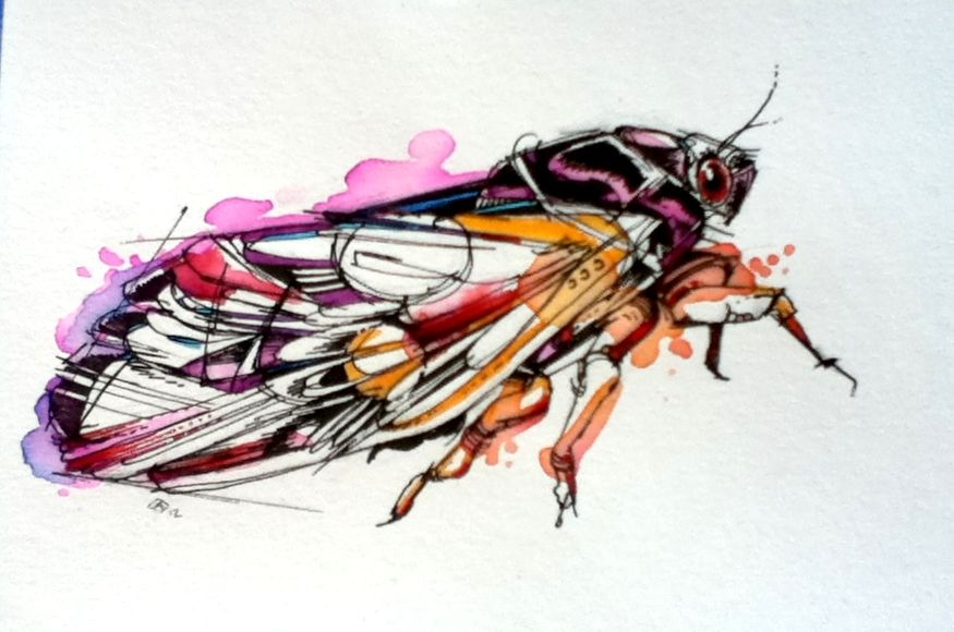 Periodical Cicada By FinchFight On DeviantArt