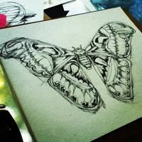 Atlas Moth- WIP by FinchFight