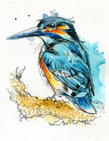 Kingfisher II by FinchFight