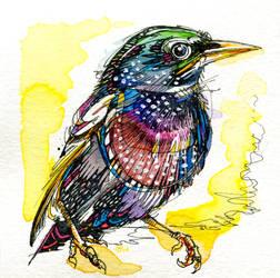 Little Starling by FinchFight