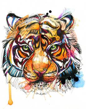 Brilliant Bengal Tiger