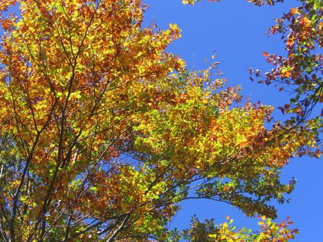 Fresh autumn leaves...
