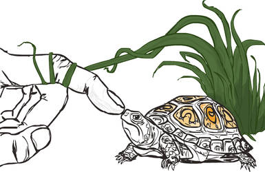 The Turtle Connection