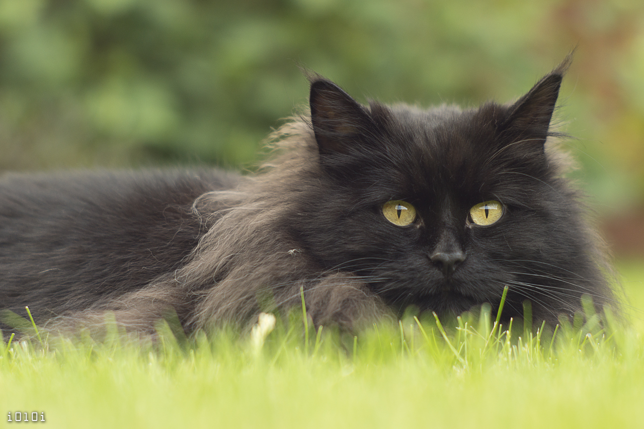 Catface. In Grass. Again. by I0l0I