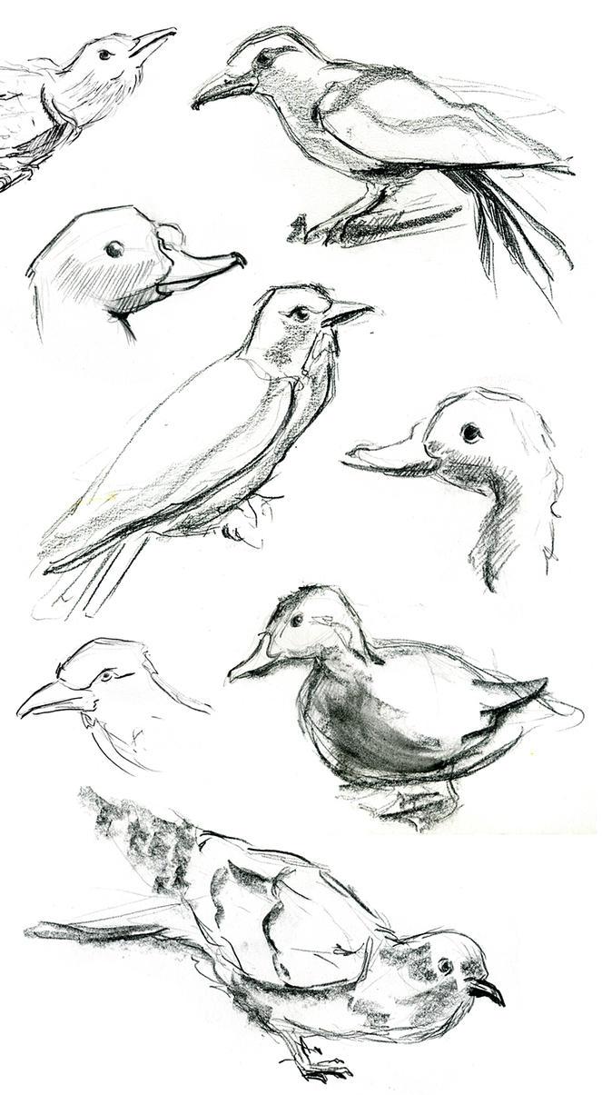 Birds sketches