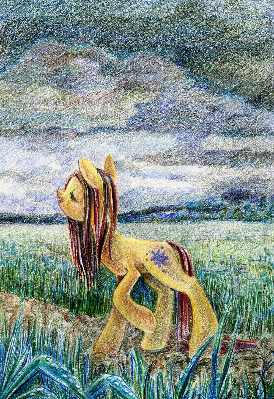 Rainy Fields by Maytee