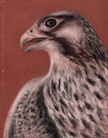 .:.Falcon.:.