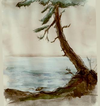 Wild Coast by Elhanna