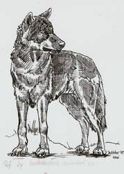 Inktober Wolf2 by Elhanna