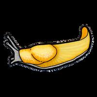 California Banana Slug (Ariolimax californicus) by hyaenija