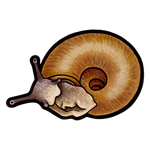 Gray-foot Lancetooth (Haplotrema concavum)
