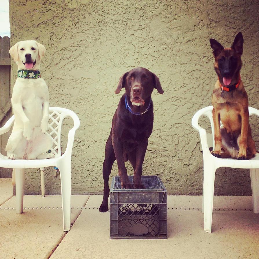 Three Musketeers by huntinlabs