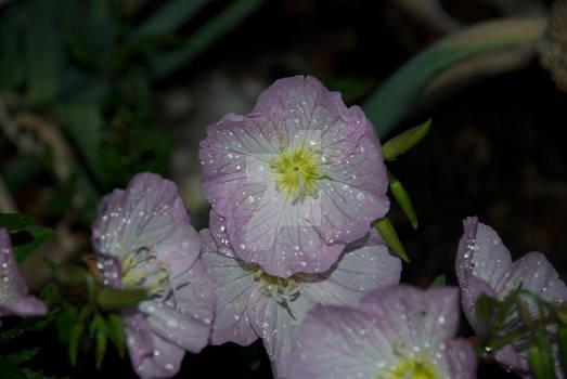 Sparkly Flower