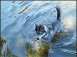 Sasha in the water