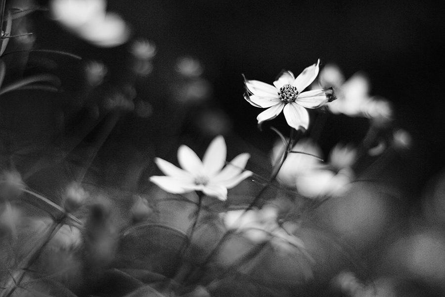 Flower by MonnieB