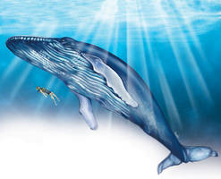 Whale by RodVill
