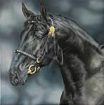 Nonius Stallion Horse Portrait