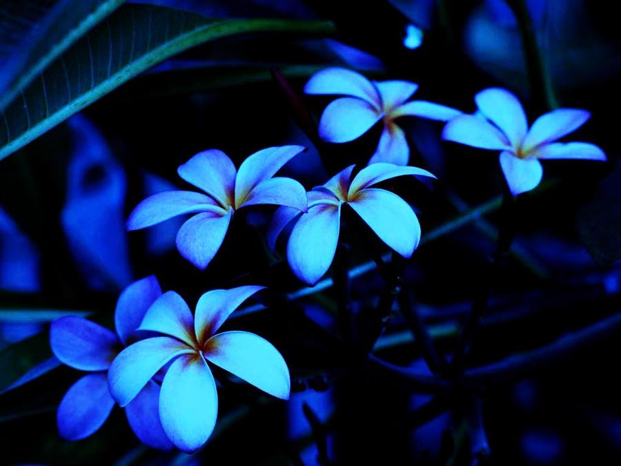 neon flowers by future luke on deviantart