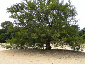 A tree... in sand by Sweet-Eny