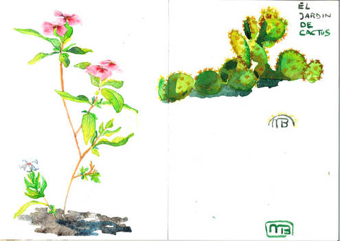 A few plants from lanzarote