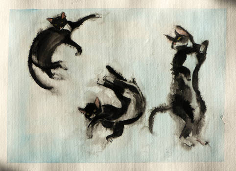 Several Midna (the cat)