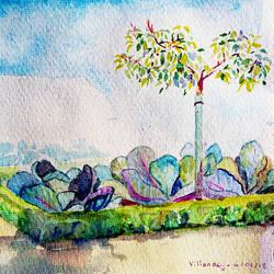 Detail of the Villandry Garden (aka cabbages!!!)