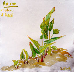 Shoots of Arum