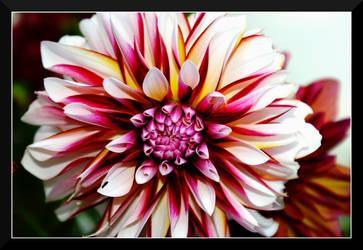 Flower Power IV by superjuju29