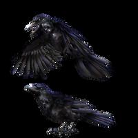 Giant raven (low version)