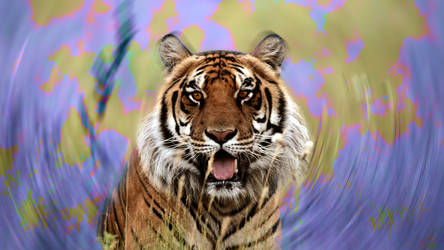 Bengal Tiger by Poolday