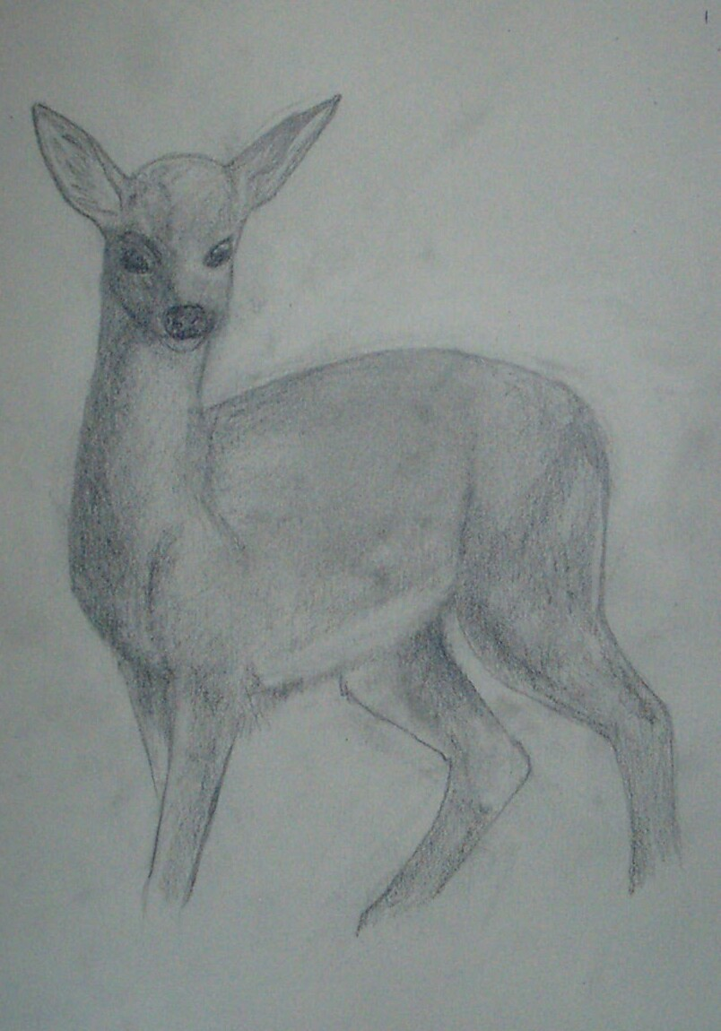 fawn sketch wip by skatoony fawn sketch wip by skatoony