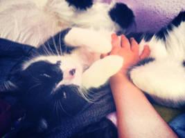 Look!A cute cat! by LoverCathy