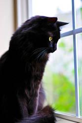 Flip the Black Cat