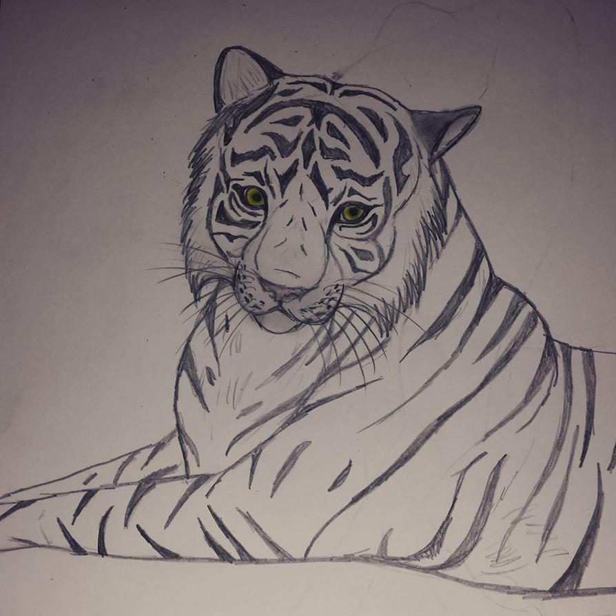 Tiger by iiBiancax3