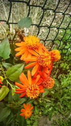 Freshly Blooming