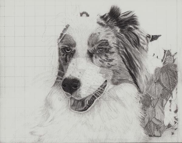 LovesDogs's Profile Picture